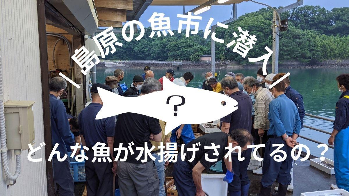 有明海・島原湾にはどんな魚がいるの? 早朝の魚市場に潜入してみた結果